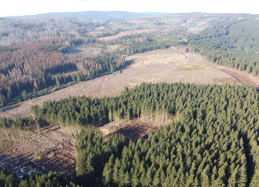 Bergwaldprojekt Wurmberg im Harz
