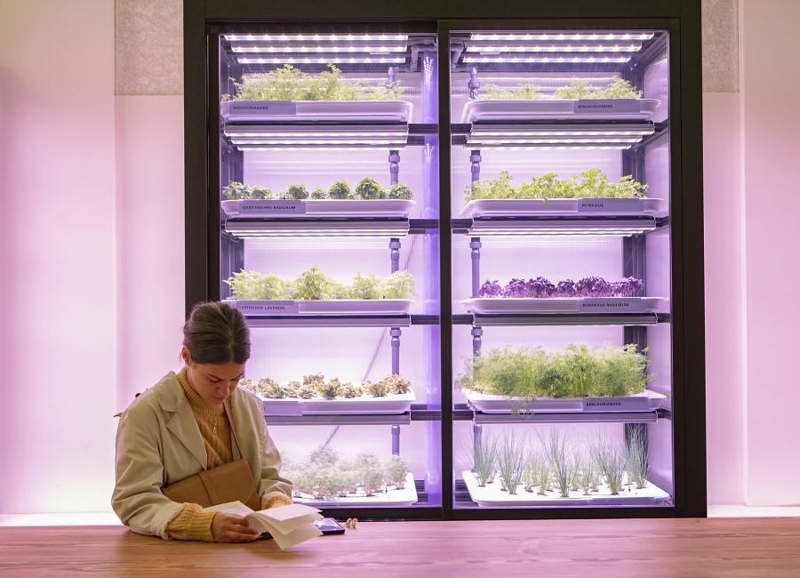 Vertical Farming Schrank Restaurant Frau